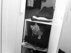 Kleiderschrank, oberstes Regal ist Tagesordnung gewoden